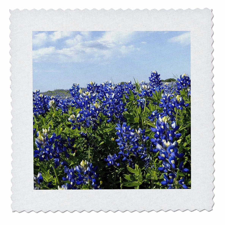 3dRose qs_94452_2 Bluebonnets, Freyburg, Texas-Us44 Fvi0010-Franklin Viola-Quilt Square, 6 by 6-Inch