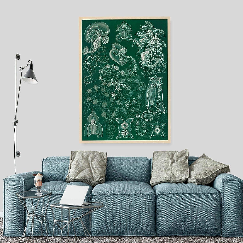 A2 A1 A3 Ernst Haeckel Biology Print  A0 A4 GLOSSY Wall Photo Poster