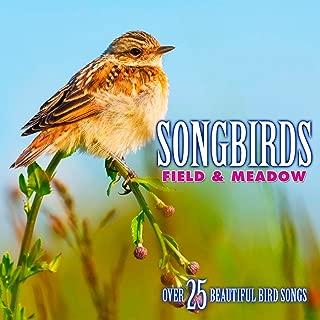 Best morning birds mp3 Reviews