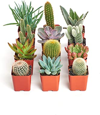 Shop Succulents | Can't Touch This Collection | Assortment of Hand Selected, Fully Rooted Live Indoor Succulent and Cacti Pla