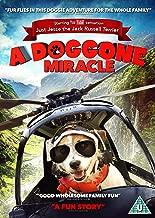 Doggone Miracle [Region 2]