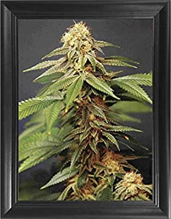 Trippy Marijuana Weed Plant 3D Poster Wall Art Decor Framed Print | 14.5x18.5 | Lenticular Posters & Pictures | Memorabilia Gifts for Guys & Girls Bedroom| Cool Hippie Psychedelic Sativa Pot Leaf Bud