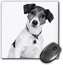 3dRose Rat Terrier Mouse Pad (mp_201521_1)