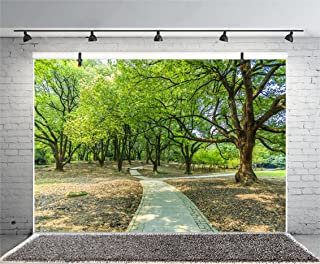 Leyiyi 5x3ft Photography Background Spring Forest Backdrop National Nature Park Path Sunlight Hiking Leisure Summer Party Stag Party Outdoor Wedding Vlogger Photo Portrait Vinyl Studio Video Prop