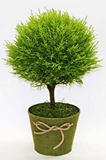 lemon cypress topiary tree