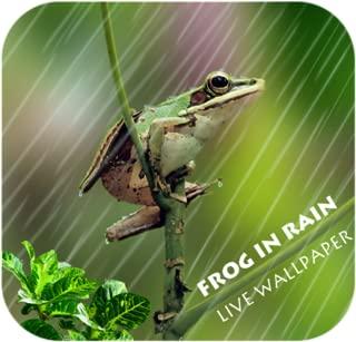 Frog In Lightening Live WP