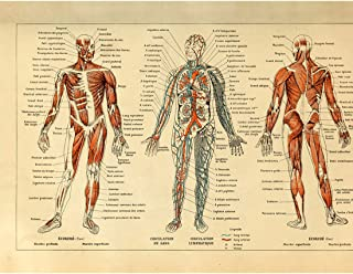 Meishe Art Vintage Poster Print Human Anatomy Reference Illustration Chart Diagram Layout Blood-Vascular System Circulatory Muscular System Medical Skeleton Body Muscle Wall Decor