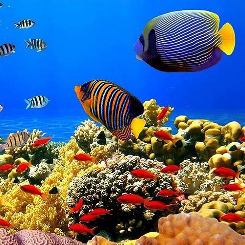 Undersea: Freie Partie