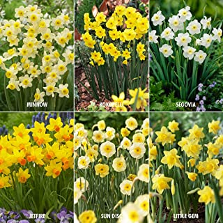 Best perennial lily bulbs Reviews