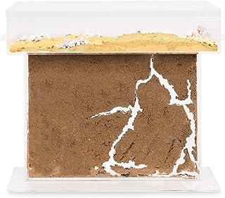 AntHouse - Hormiguero Natural de Arena - Kit T Big Acrílico 25x20x1,5 cm (Hormigas Gratis)