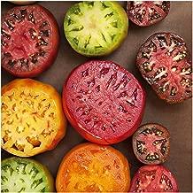 Package of 70 Seeds, Rainbow Mixed Tomato (Black Krim, Black Sea Man, Yellow Brandywine, Tiny Tim, Ace 55 & More!) Non-GMO Seeds