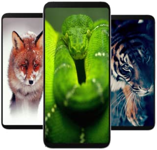 Nature Animal Wallpapers