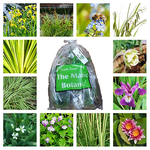 Aquatic Plants For Small Ponds: Pond Plants For Small Ponds: Amazon.co.uk