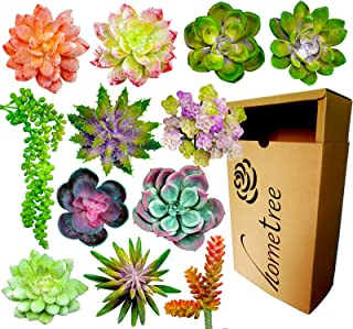 12 Fake Succulent Plants Realistic- Artificial Succulent Plants- Large Faux Succulents Unpotted- Hanging Floral Succulent Cuttings Arrangement- Outdoor And Indoor- Wall Decor -Easy DIY With Stems