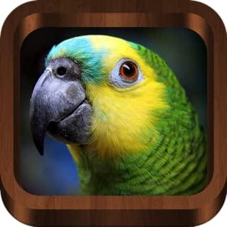 Bird Calls - Bird Guide with 2000+ Bird Songs & Sounds (Mobile, Tablets)