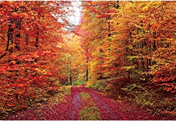 DaShan 8x5ft Fall Forest Path Backdrop Autumn Foliage Party Autumn Park Scene Fallen Leaves Photography Background Wedding Birthday Party Decor Fall Theme Party Outdoor Travel Photo Props