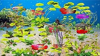 Flower Horn Aquarium [Download]