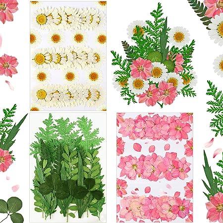 78 Pièces Fleurs Pressées Séchées Réelles Fleurs Pressées Séchées de Saint-Valentin, Pied d'Alouette, Marguerites, Pétales de Feuilles, Fleurs Pressées Naturelles pour Saint-Valentin DIY