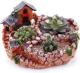 Amazon.es: mini jardin