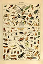 Vintage Poster Print Art Insects Identification Reference Species Collection Entomology Diagram Chart Wall Decor (12.99'' x 19.69'')