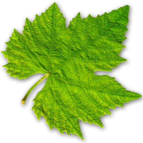 Vinooracle Weinempfehlung