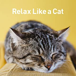 relax like a cat