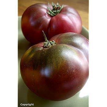 Cherokee Purple Heirloom Tomato Seeds- 75+ Seeds for 2020 by Ohio Heirloom Seeds