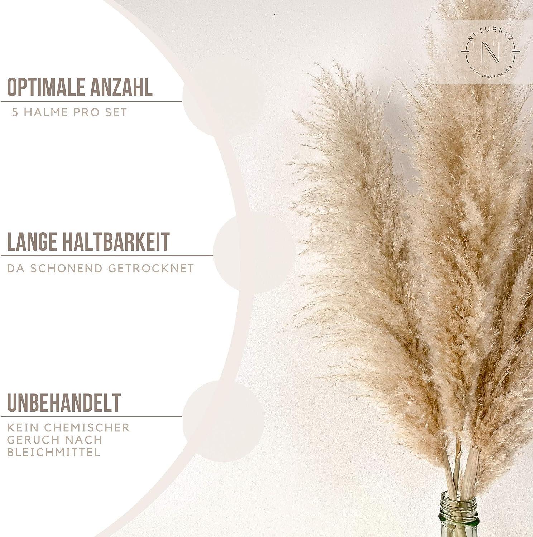 5, 120 Pampas Grass lang beige//Creme deko Gras Gross Naturalz pampasgras getrocknet getrocknete trockenblumen gro/ß getrocknetes Pampas Gras deko Boho