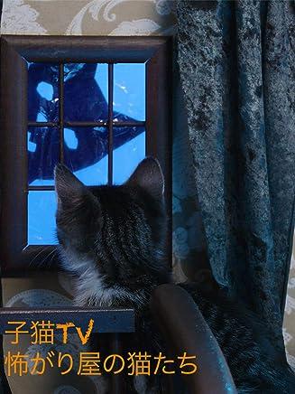 ビデオクリップ: 子猫TV 怖がり屋の猫たち
