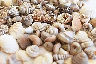 FSG - 200 (2 oz) Tiny Indian Ocean Shell Mix Mini Shells 1/4