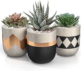 3 inch Small Succulent Pots with Drainage - Set of 3 Concrete Planter Pots for Succulent Plants - Cement Planter Cactus Po...