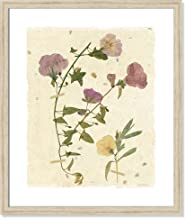 Casa Fine Arts Pressed Morning Glory Vintage Botanical Textured Parchment Wall Art Archival Print, 20.5