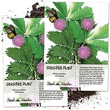 Best sunshine 4 seeds Reviews