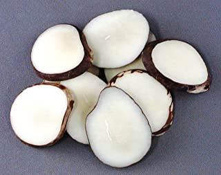 Tagua Nut Slices (Pack of 25)