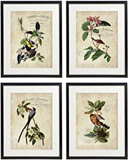IDIOPIX Vintage Bird & Botanical Home Decor Wall Art Print Set of 4 Prints UNFRAMED No.9