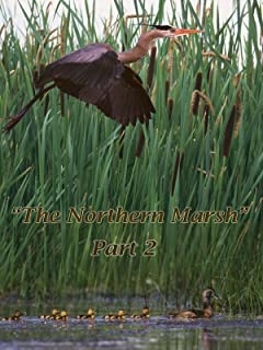 The Northern Marsh: Part 2