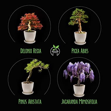Bonsai, Cactus, and Succulent Kit Bundle - All in One Grow Kit for Gardening Indoors - Gift for Gardeners
