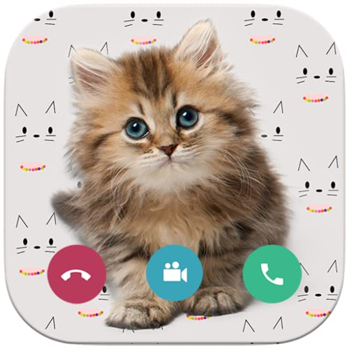 Video Call Cat  - Call cat talking meowing Translator