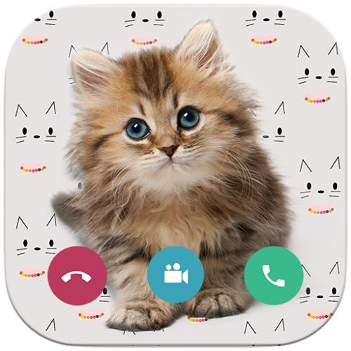 Video Call Cat  - Call cat talking meowing Translator