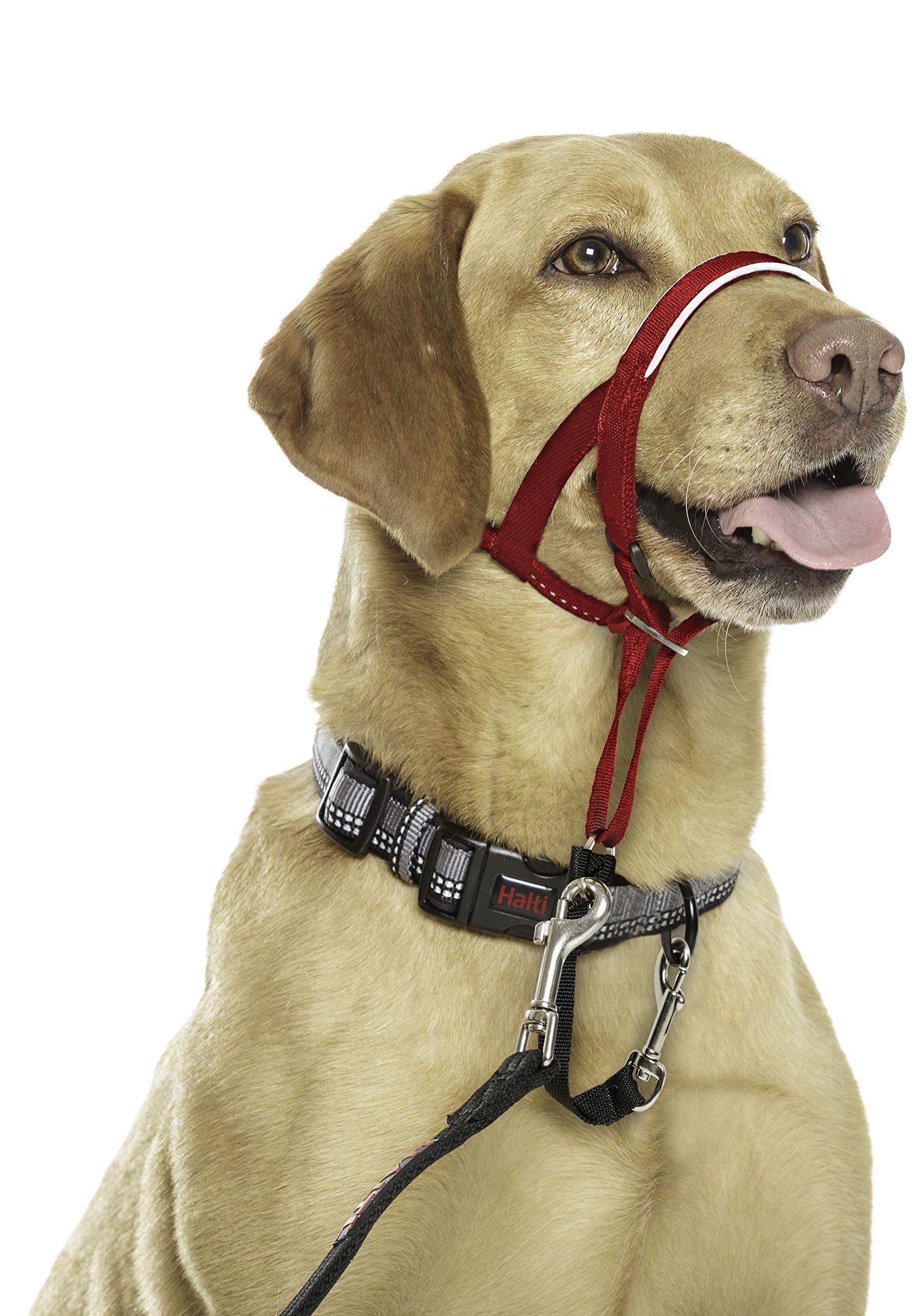 Halti Headcollar: Amazon.es: Productos para mascotas