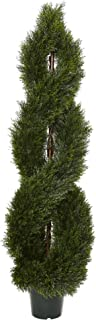 tall outdoor topiary