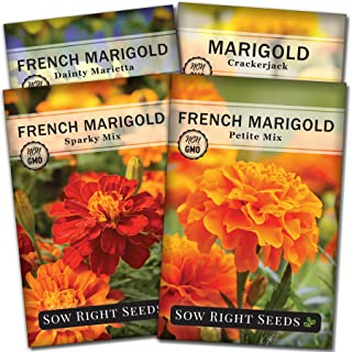 Sow Right Seeds - Marigold Seed Collection for Planting, Crackerjack, Sparky, Dainty Marietta, and Petite Mix Marigolds to...