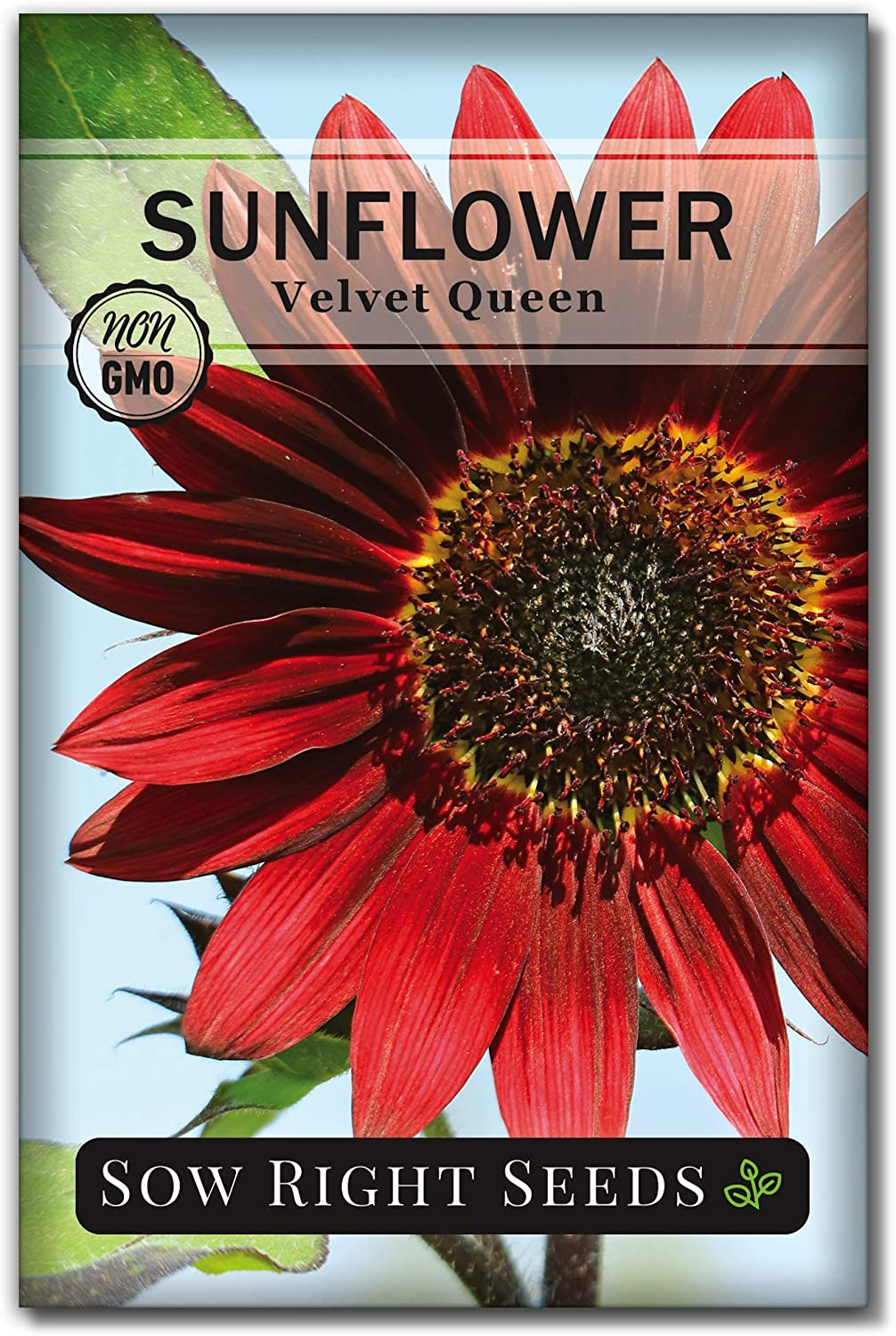 Sow Max 76% OFF Right Seeds - Velvet Queen for Full Planting- Sunflower Seed Deluxe