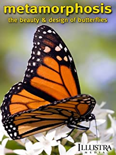 Metamorphosis: The Design and Beauty of Butterflies