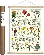 botanica style co