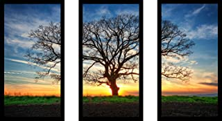 """Picture Perfect International Lonely Tree in a Field 1"""" Framed Plexiglass Wall Art Set of 3"""