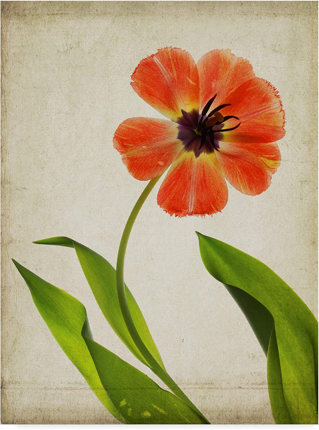 Trademark Fine Art Parchment Flowers V by Judy Stalus, 14x19
