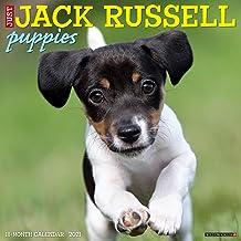 Just Jack Russell Puppies 2021 Wall Calendar (Dog Breed Calendar)