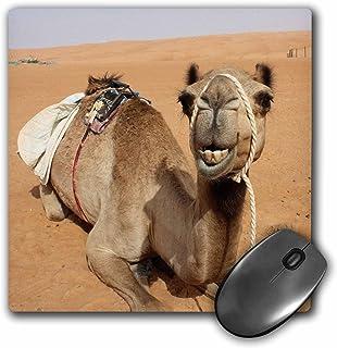 3dRose sonriente descansando en Bedouin Camp de camellos en Omán Photo Mouse Pad, 20,3x 20,3cm (MP _ _ _ _ _ _ _ _ _ _ 164767_ _ _ _ _ _ _ _ _ _ 1)