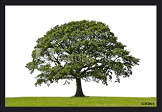 Lone Oak Tree Photography A-91523 (36x24 Giclee Art Print, Gallery Framed, Black Wood)